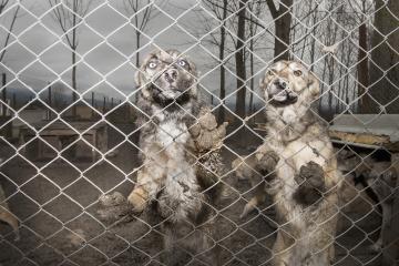 Shelterdogs
